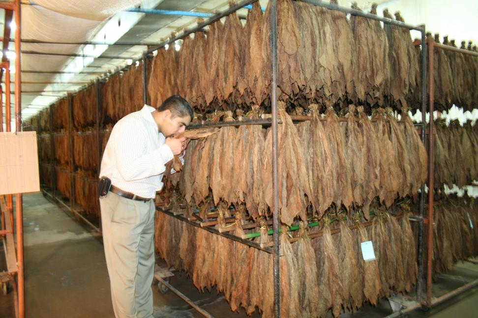 Blanco Nicaraguan Cigar Factory Tour Nov 2015
